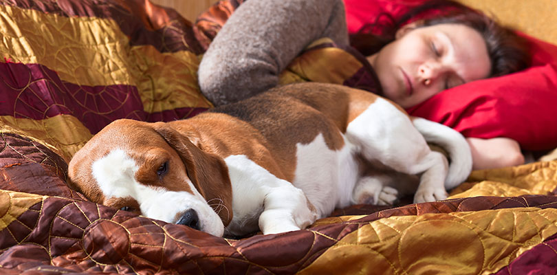 A woman is sleeping in bed while her hound dog lays close to her
