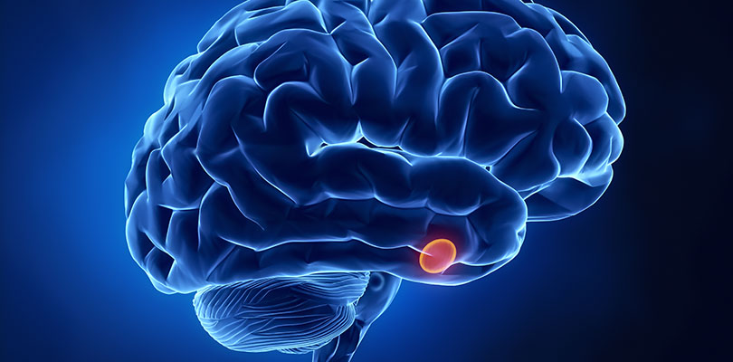 The pituitary gland and brain