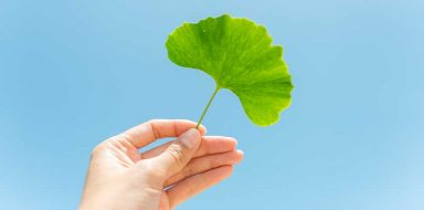 Someone holding up a ginkgo biloba leaf to a blue sky.
